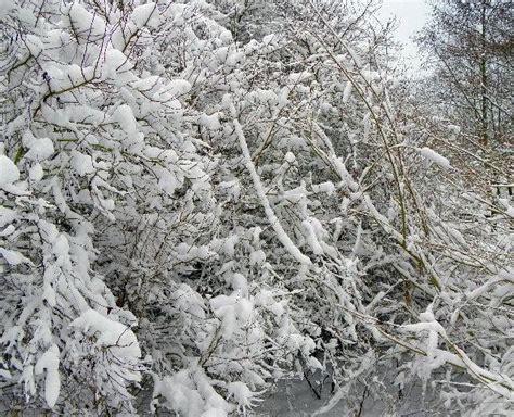 Eichhörnchen Im Winter 4283 by Kr 228 Hen