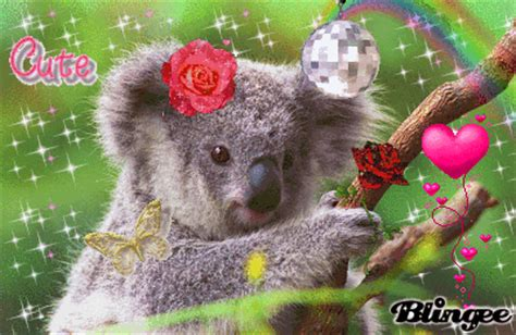 wallpaper emo gif baby koala gt cute picture 57369546 blingee com