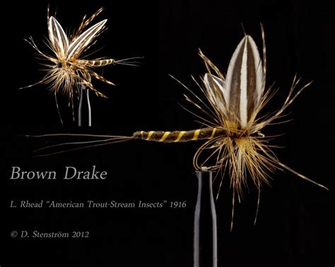 brown drake pattern amazing artistic brown drake pattern fly tying patterns
