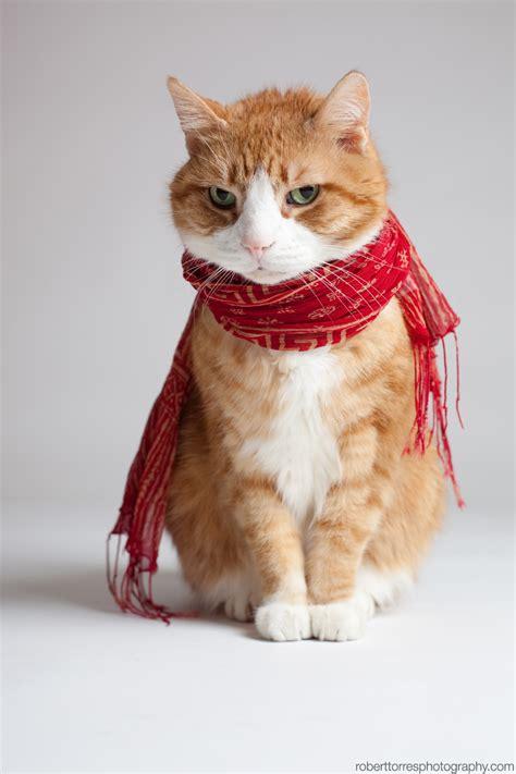 Cats Fashion cat images 70 fashion stylish cats funnycatsgif