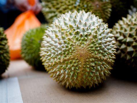 Bibit Durian Musang King 2017 jual bibit durian musang king di enarotali www