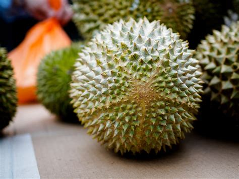 Bibit Buah Durian jual bibit durian musang king di enarotali www