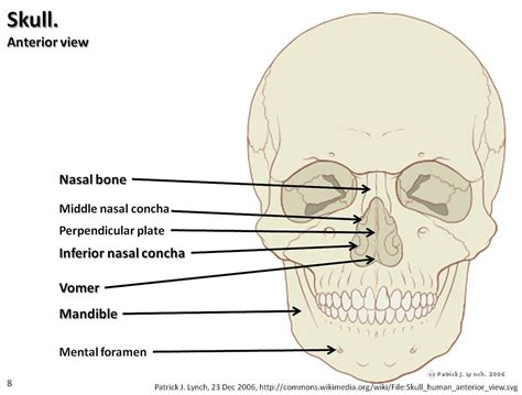skull diagram labeled skull diagram anterior view with labels part 3 axial sk