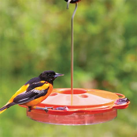 duncraft com multi use oriole nectar feeder