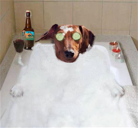Bathtub Day by October 5th Happy Bathtub Day Doxieclubhouse