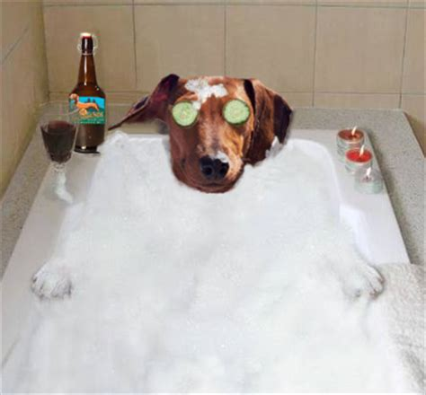 bathtub party october 5th happy bathtub party day doxieclubhouse