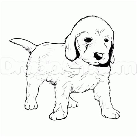 golden retriever coloring pages az coloring pages