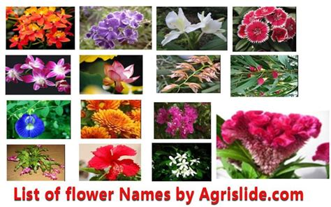 big list  flower names  local names
