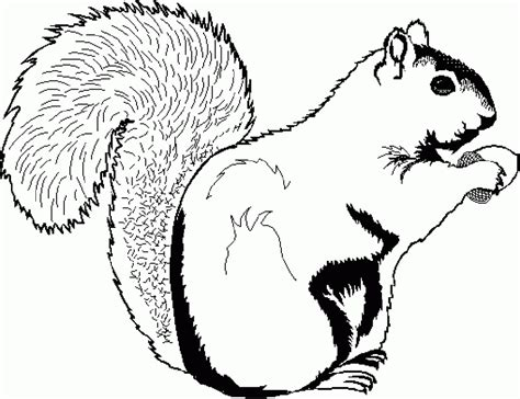 coloring page squirrel free printable squirrel coloring pages for kids