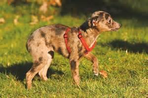 hund allein zu hause trennungsstress hunde allein zu haus schweizer hunde