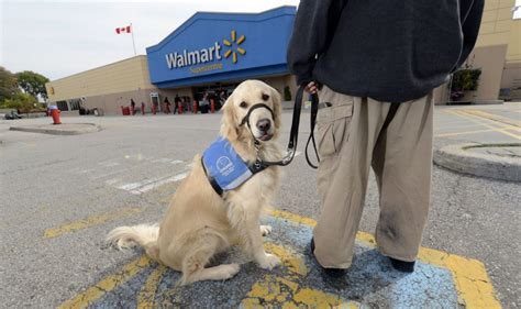 does walmart allow dogs is badgered by staff at local walmart about service toronto