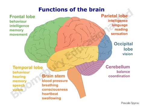 different sections of the brain april 2013 pangburn s posts