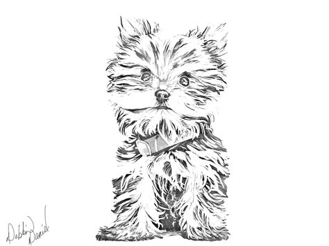 yorkshire terrier tattoo designs yorkie sketch sketches yorkies and