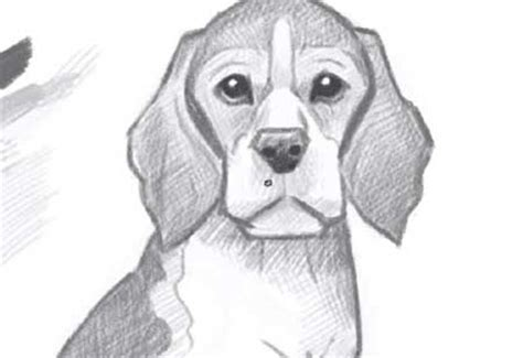 how to a beagle how to draw beagle puppy