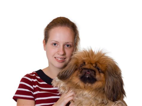 how to find a breeder how to find a reputable breeder find the best peke pup
