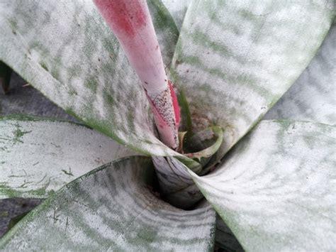 pianta con fiore rosso pianta grassa con fiore rosso centrale le piante grasse a