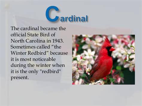 state bird of north carolina abc s of north carolina