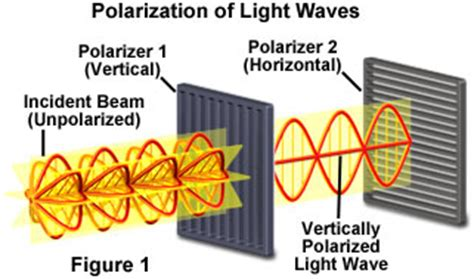 Polarization Of Light by Molecular Expressions Microscopy Primer Light And Color Polarization Of Light Interactive