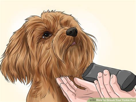groomed yorkie poo pictures how to groom your yorkie poo 10 steps with pictures wikihow