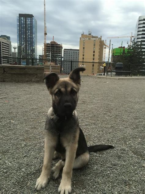 free puppies seattle would allow dogs to roam free in cal park chs capitol hill seattle