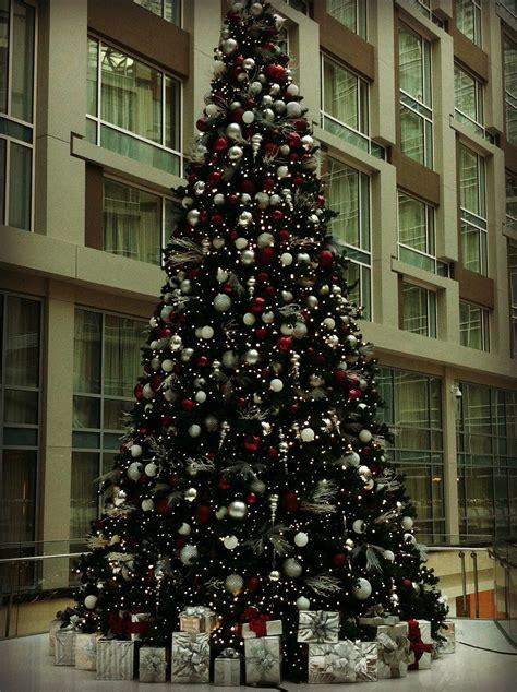 2014 christmas trees gallery