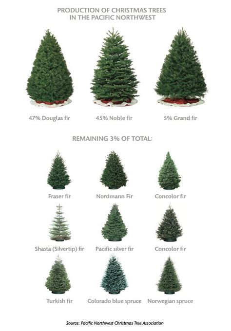 25 best ideas about christmas tree farms on pinterest