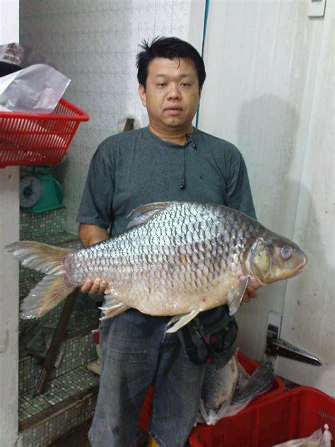 river fish supplier peters fish trading  sarawak