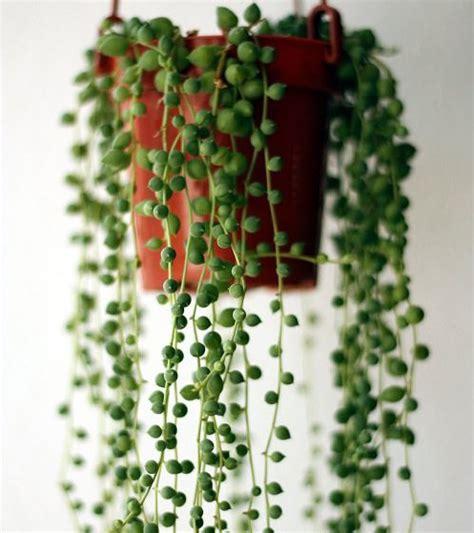 indoor plants indirect sunlight best indoor plants according to different light conditions