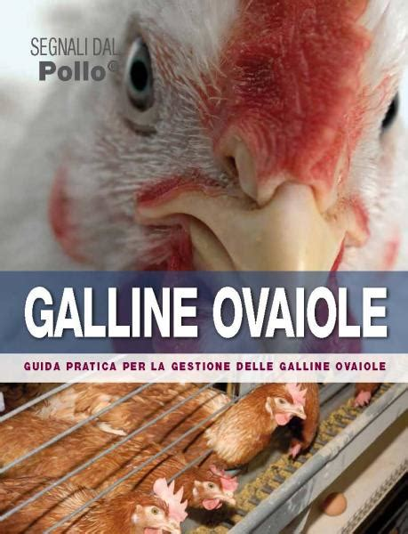 galline ovaiole alimentazione segnali dall alimentazione setup farm