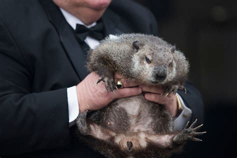 groundhog day 2016 zoo groundhog day verdict is in new york post