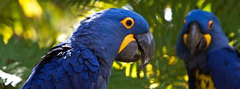 list of 20 most expensive birds 10 most expensive animals in the world therichest