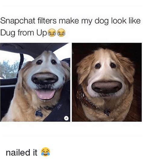 snapchat filters   dog   dug   nailed