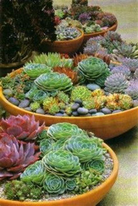Pot Sepeda 6 By Sun Florist 25 best ideas about succulent rock garden on