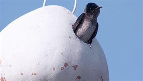 birds that eat mosquitoes sciencing