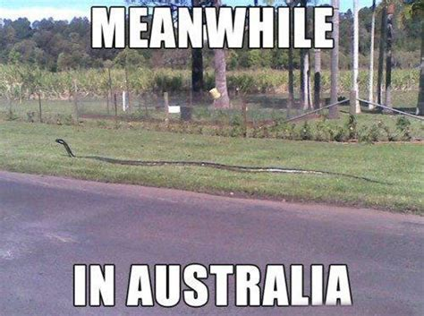 Funny Australia Day Memes - meanwhile in australia lauren q hill