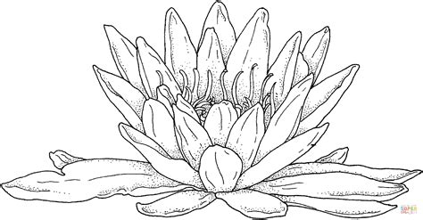 coloring page water lily 301 moved permanently