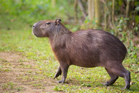 Small Animals Type C five rodents from around the world debugged