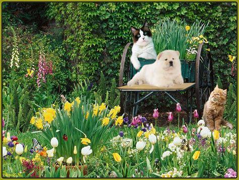 Garden Animals Animals In Desktop Wallpaper Wallpapersafari