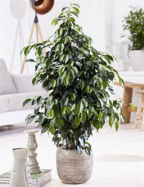 plants easy to grow indoors plants easy to grow indoors easy houseplants to grow 6
