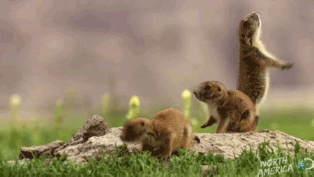discovery channel lol gif find share  giphy