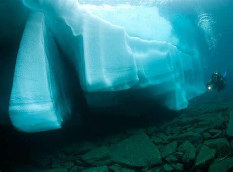 fotografia belugas  cuevas submarinas taringa