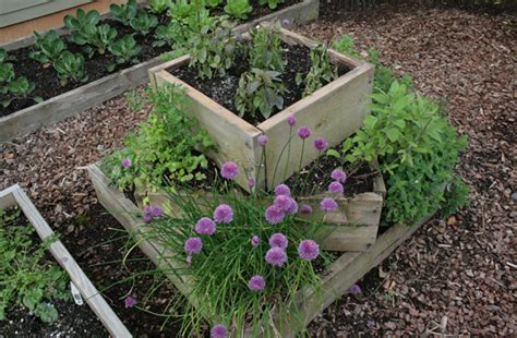 planting a culinary herb garden landscaping gardening designs in herb gardening herb gardening