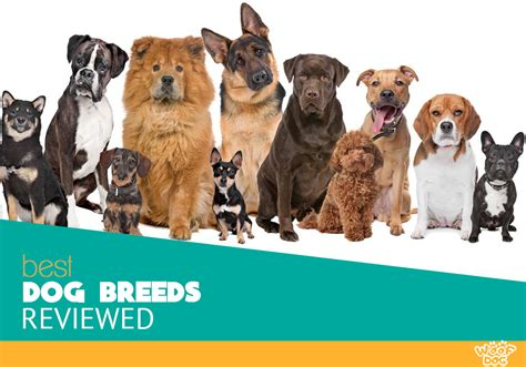choosing the best dog breed for your family and children best dog breeds information center akc types groups and