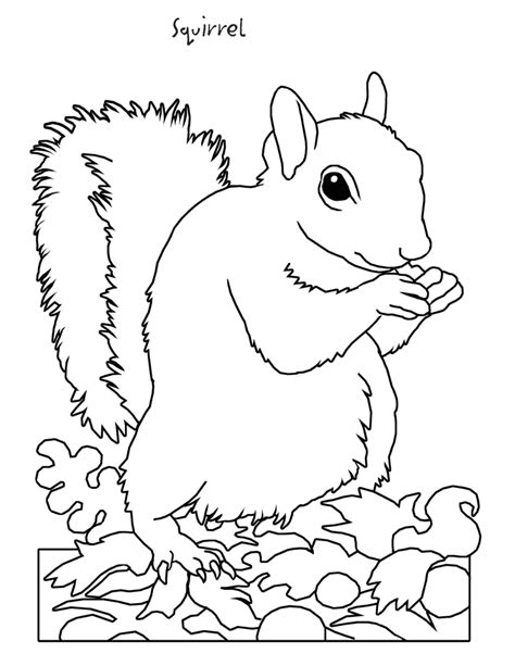 realistic squirrel coloring page realistic printable owl coloring page for kids throughout