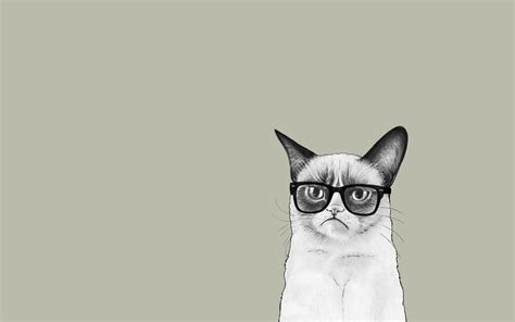 wallpaper cat illustration minimalist wallpaper grumpy cat wallpapers
