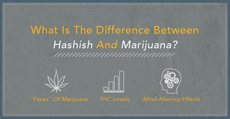 what is the difference between hashish and marijuana