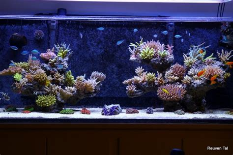 floating aquascape general discussion nano reef