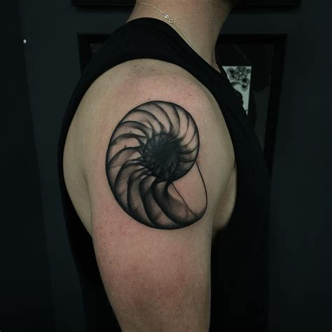 nautilus shell tattoo pari corbitt best ideas gallery