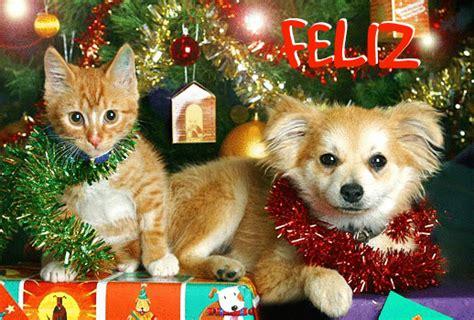 imagenes de feliz navidad con gatitos 161 feliz navidad y feliz a 241 o nuevo amigos de los animales