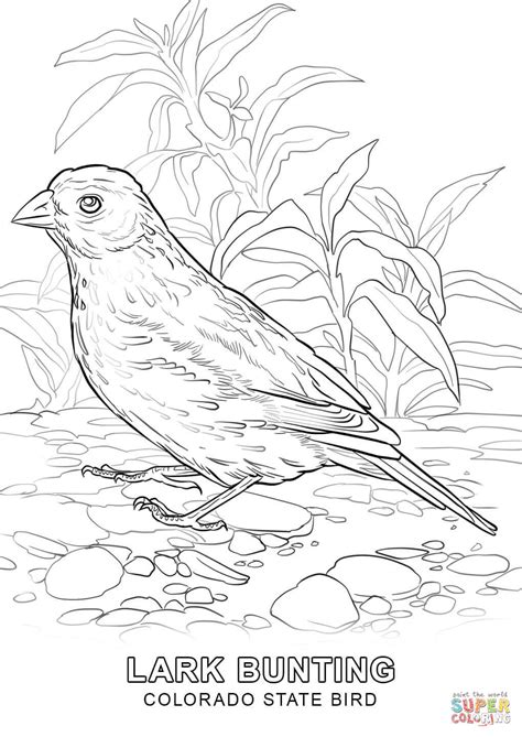 State Bird Coloring Page colorado state bird coloring page free printable